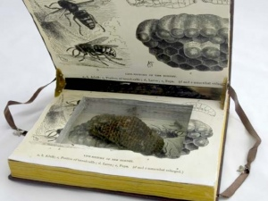 Virginia Burroughs - The Hornet Book